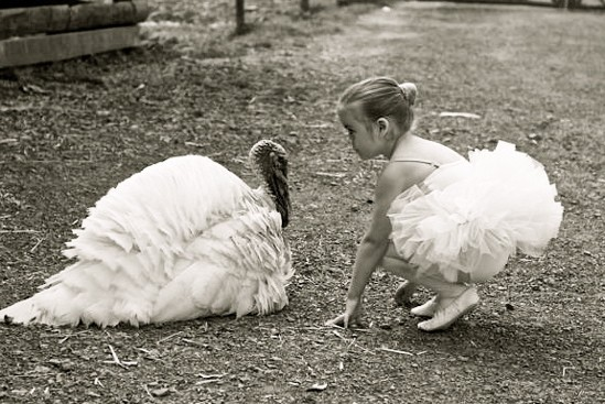 Pardon a Turkey, Go Vegetarian This Thanksgiving!