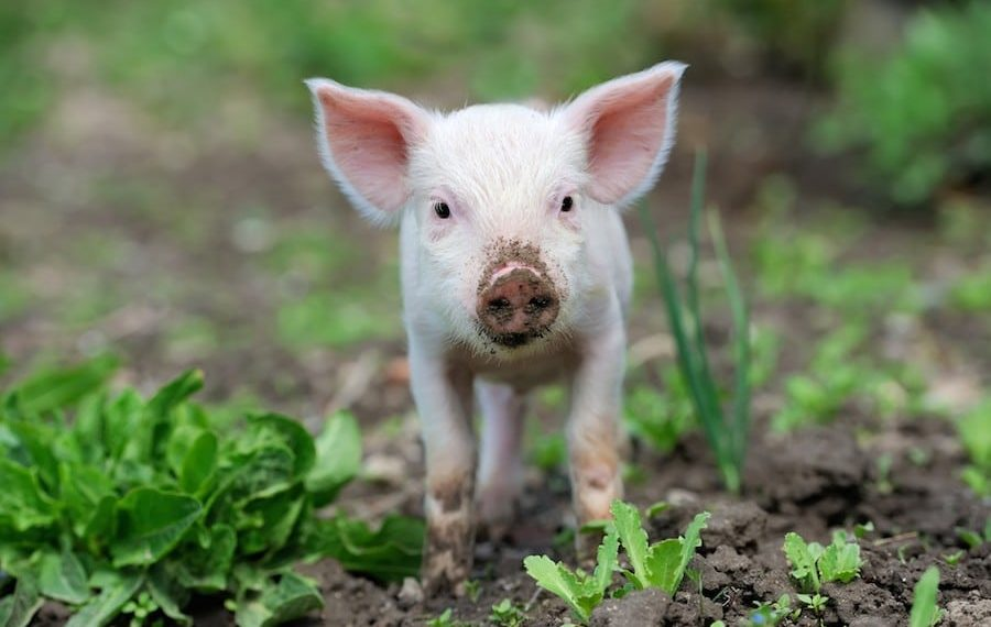 6 Books That Will Change the Way You See Farmed Animals