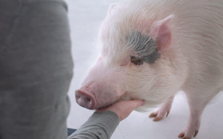 Powerful New Short Film Casa de Carne Is Changing Hearts and Minds