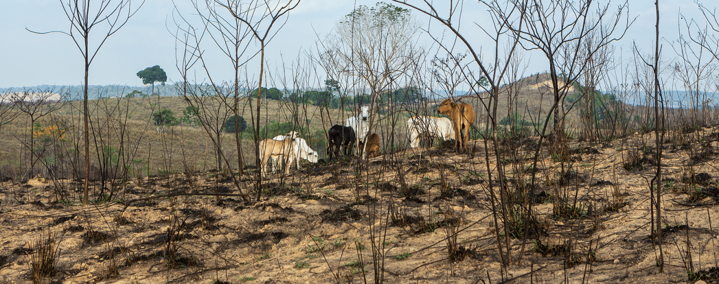 New Documentary Explores the Truth Behind Rainforest Destruction in Brazil