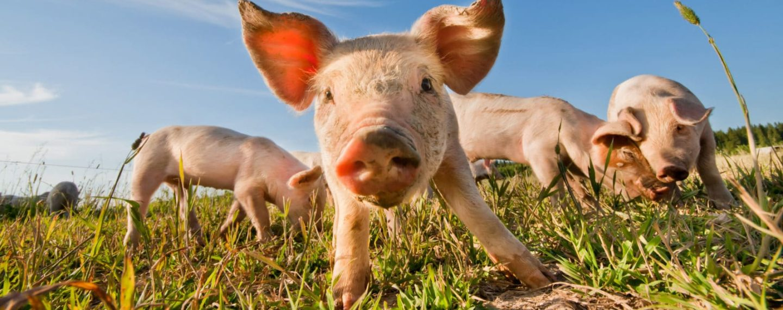Las 10 mejores frases sobre veganismo