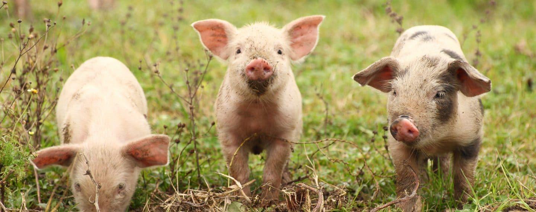 ¿Necesitas ánimos? Estos lindos videos de animales felices te harán sonreír