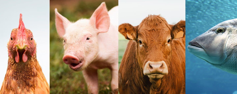 Pon a prueba tu conocimiento sobre estos animales con este divertido test