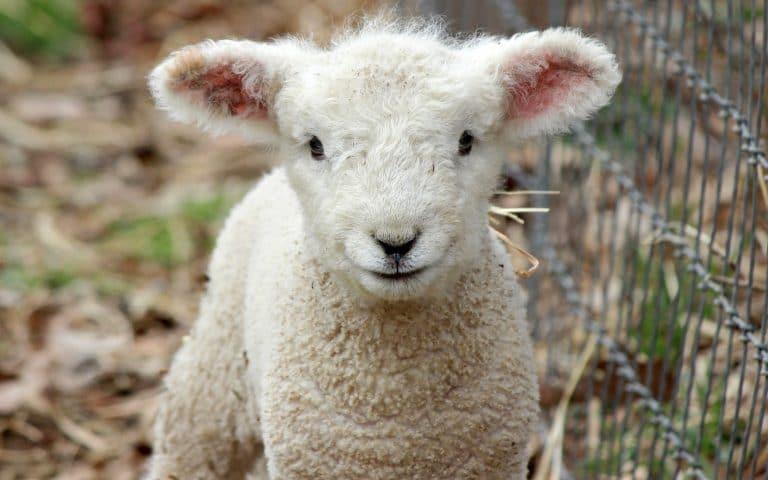 Encantadoras fotos de animales libres y felices para mejorar tu día