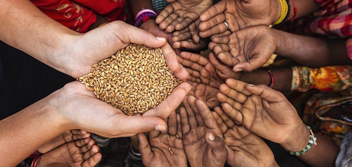 Estudo: se virasse vegano, EUA alimentaria sua população e mais 390 milhões de pessoas