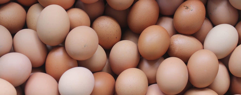 Estudo conclui que o consumo de ovos pode aumentar o risco de doença cardíaca e morte prematura